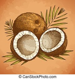 engraving illustration of coconut - Vector engraving...