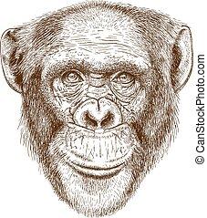 engraving head of the chimpanzee - Vector engraving...
