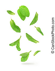 green mint leaves falling in the air isolated on white...