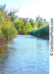 landscape image of a large river shore vegetation -...