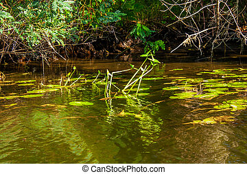 Landscape image of a small river reedy and old trees - a...