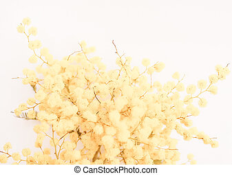 Retro looking Mimosa flower plant - Vintage looking Yellow...