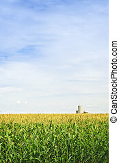Corn field with silos - Agricultural landscape of corn field...