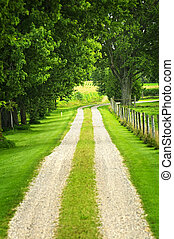 Farm road - Rural road on small scale sustainable farm with...