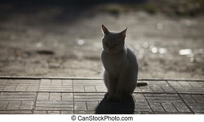 white cat sitting in the morning at dawn, the sun heats the...