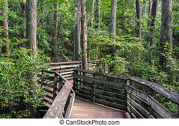 Boardwalk path - A boardwalk on the Bald Cypress path in...