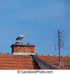 Stork on the chimney