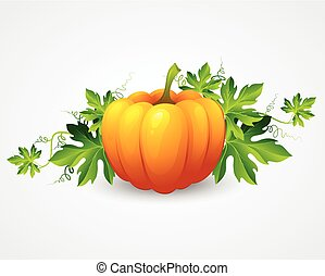 Vector pumpkin and leaves. Vector illustration