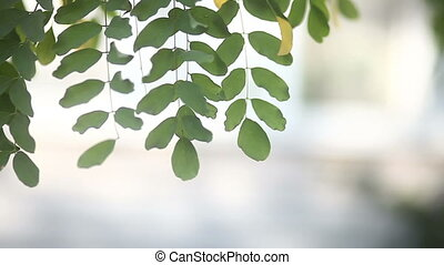 leaf green tree branch on a white background summer blurred...