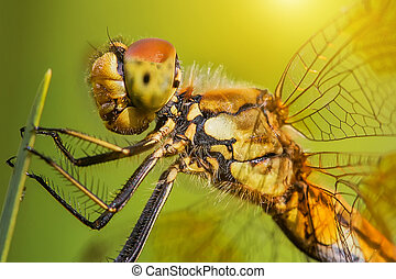 Closeup of dragonfly sitting on a green leaf - Closeup of...