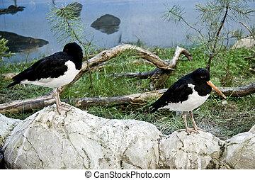 Two birds on stones
