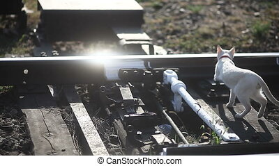old railroad tracks close-up Backlit sunlight cat goes...