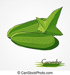 cucumber - Hand drawn vector green cucumber vegetable with...