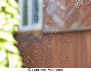 Cobweb - The cobweb on a garden background