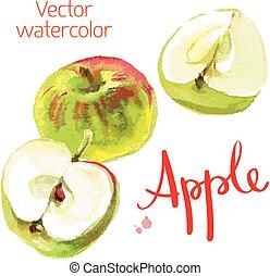 Kitchen garden - Vector watercolor sketch. Juicy ripe fruit....