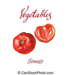 Kitchen garden - Vector watercolor sketch. Vegetables. Ripe...