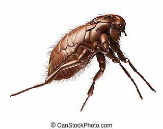 a flea - medically accurate illustration of a flea