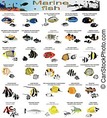 Marine fish - Collection of different species of marine fish