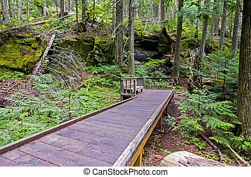 Boardwalk Glacier National Park - A boardwalk in glacier...