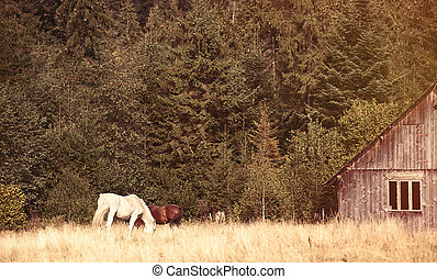 Old house and horses in the forest, Ukraine