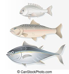 Set of Edible Fishes Dorado, Salmon and Tuna Vector Image