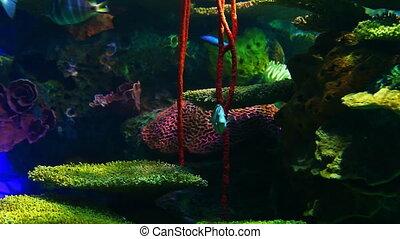 Bright Tropical Fish swim in colorful coral