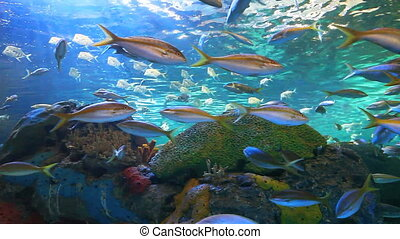 Yellowtailed Snapper and other fish
