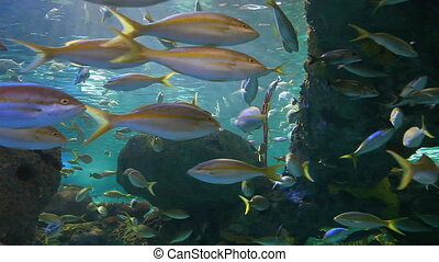 Large schools of fish drifting in a colorful coral reef