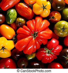 Square background of assorted fresh ripe tomatoes - Square...