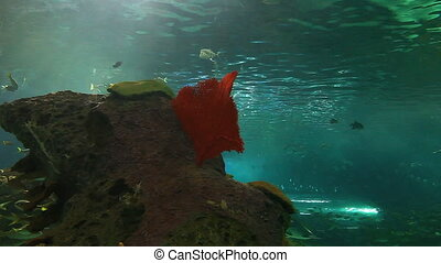 Schools of fish and sharks - A close view of schools of fish...