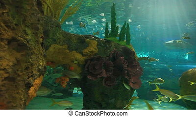 Sharks and tropical fish - Large Sharks and tropical fish...