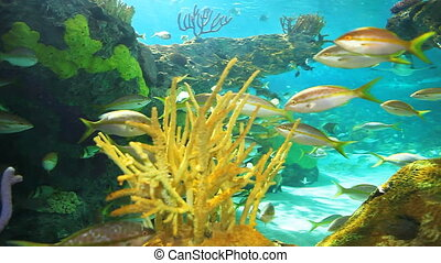Reef with Yellowtailed Snapper