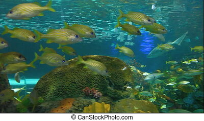 Schools of colorful tropical fish - Large Schools of...