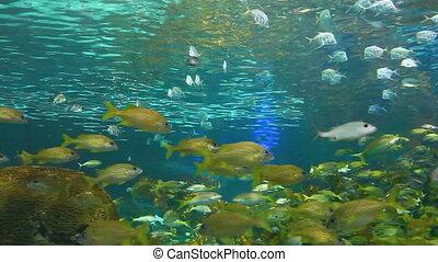 Schools of tropical fish - Colorful schools of tropical fish