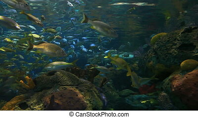 Colorful schools of tropical fish - Huge colorful schools of...