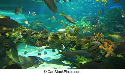 Swimming tropical fish - Colorful coral encrusted reefs with...