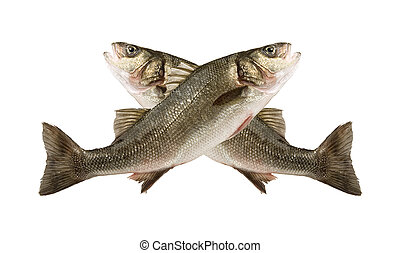 sea bass fish jump two