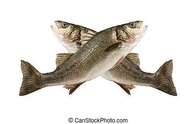 sea bass fish jump two