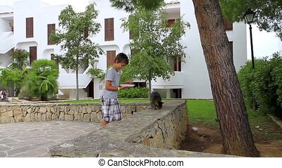 Young boy feeding a group of cats outdoors.