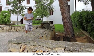 Young boy feeding a group of cats outdoors