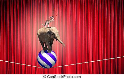 Zirkus, tiere