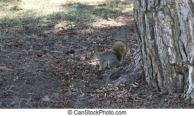 Squirrel Sitting In Shade Of Tree - Squirrel In Shade Of...