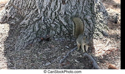 Squirrel Sitting And Lying In Shade - Close Shot Of Squirrel...