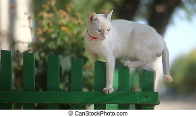 white cat sitting on wooden fence in the morning basking in...