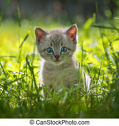 kitten on grass close up