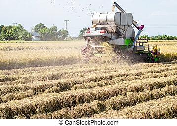 Combine harvester harvesting rice
