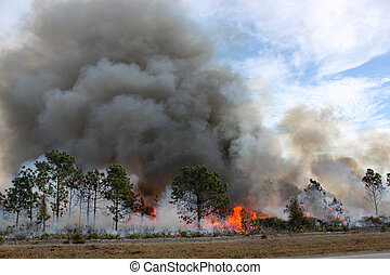 Florida Forest Ablaze - Controlled forest fire in Central...