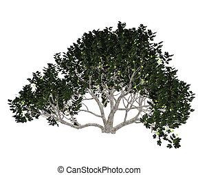 Fig tree - 3D render - Fig, ficus carica, tree isolated in...