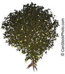Lemon tree - 3D render - Lemon, citrus limon, tree isolated...
