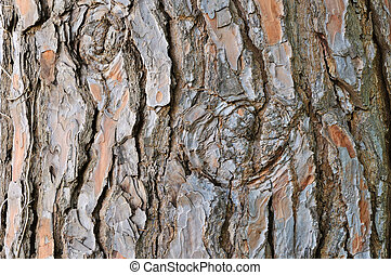 Old pine bark - Rough cracked textured pine bark background...